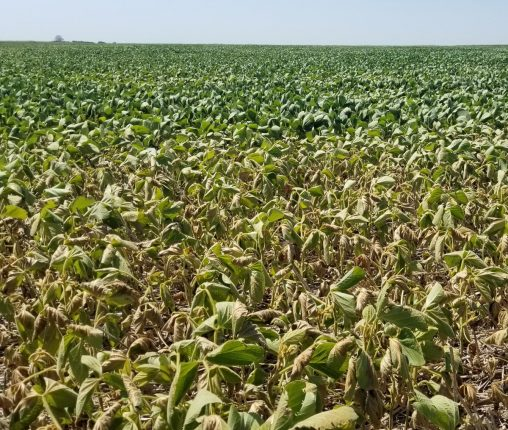 Sequía producción caería en casi 4 M Tn