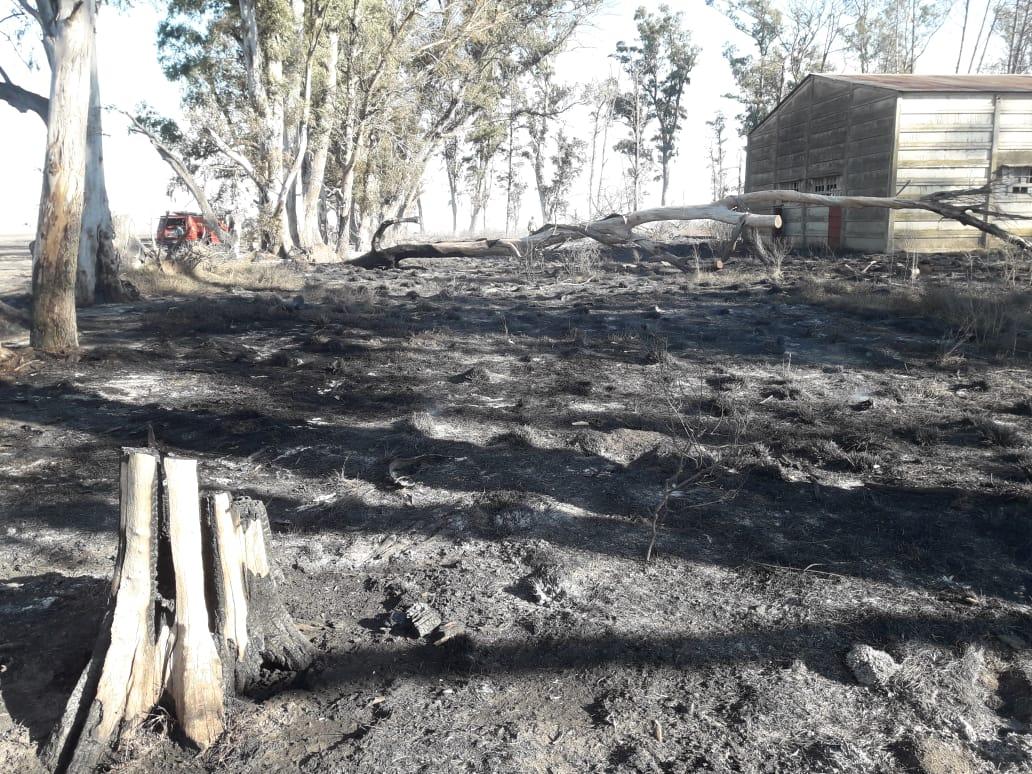 Incendio de campo hoy domingo