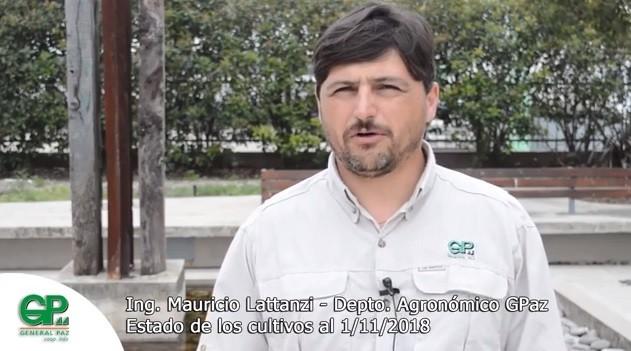 Ing Mauricio Lattanzi estado de cultivos