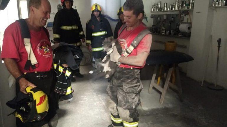 Bomberos rescatan un gatito