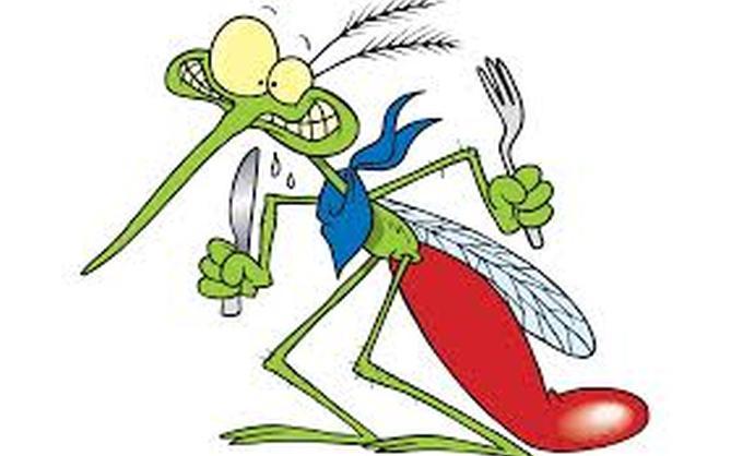 Mosquitos al ataque